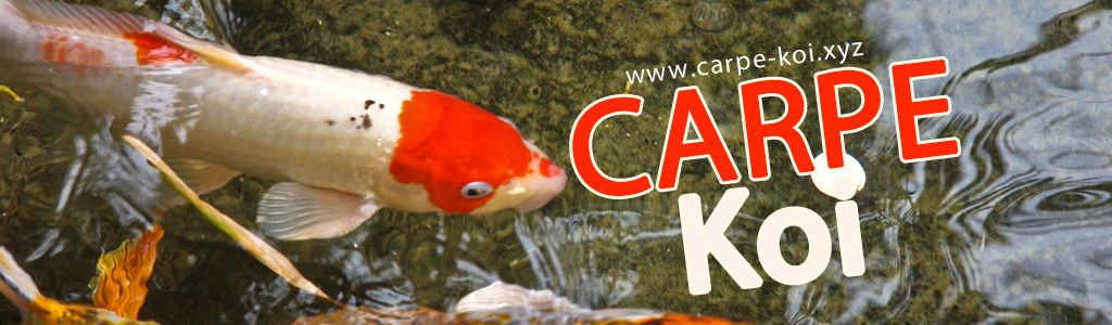 Comment bien acheter une carpe koi for Carpe koi a acheter